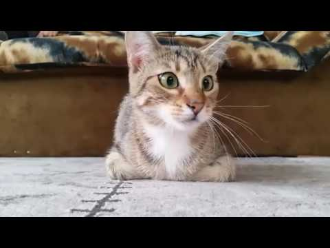 Cat Watching Horror Movie - YouTube