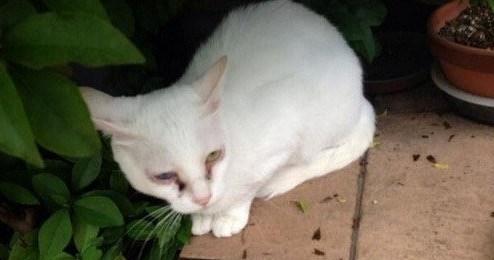 【炎上】蓮舫が飼っている猫の様子がおかしいと騒ぎに | netgeek