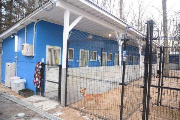 殺処分ゼロ活動施設から犬12匹逃走 広島・神石高原、犬舎ドア開く (山陽新聞デジタル) - Yahoo!ニュース