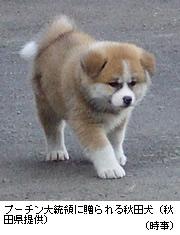 ザギトワ、秋田犬の名前を「マサル」から変更へ