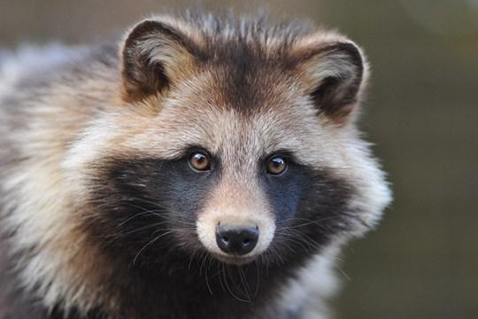 動物の画像を貼って地元の方言を喋らせて雑談するトピ