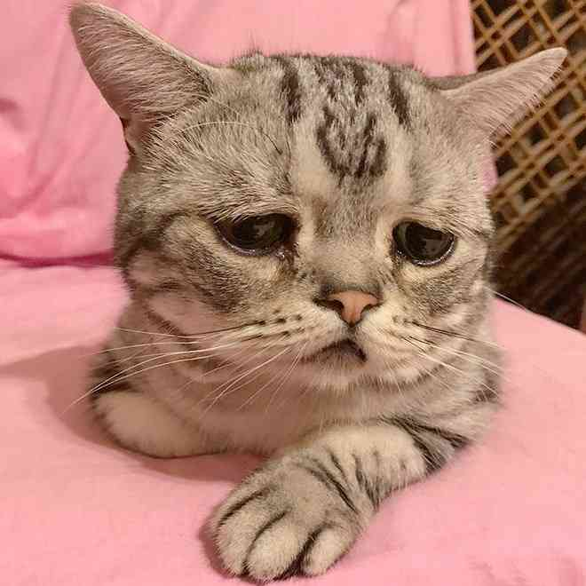 垂れ目が個性的な超キュートの猫が話題に「愛さずにいられない」