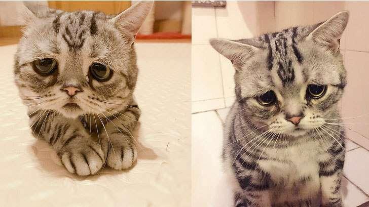 垂れ目が個性的な超キュートの猫が話題に「愛さずにいられない」 | チャンネル「てみた」