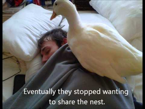 My Pet Ducks - YouTube