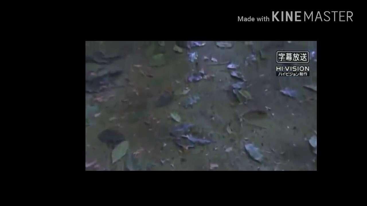 西遊記悟空VS幻翼大王Part1 - YouTube