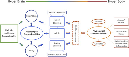 High intelligence: A risk factor for psychological and physiological overexcitabilities - ScienceDirect