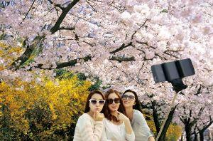 「今年の花見は韓国で」韓国観光公社が日本人旅行客誘致へ | 保守速報