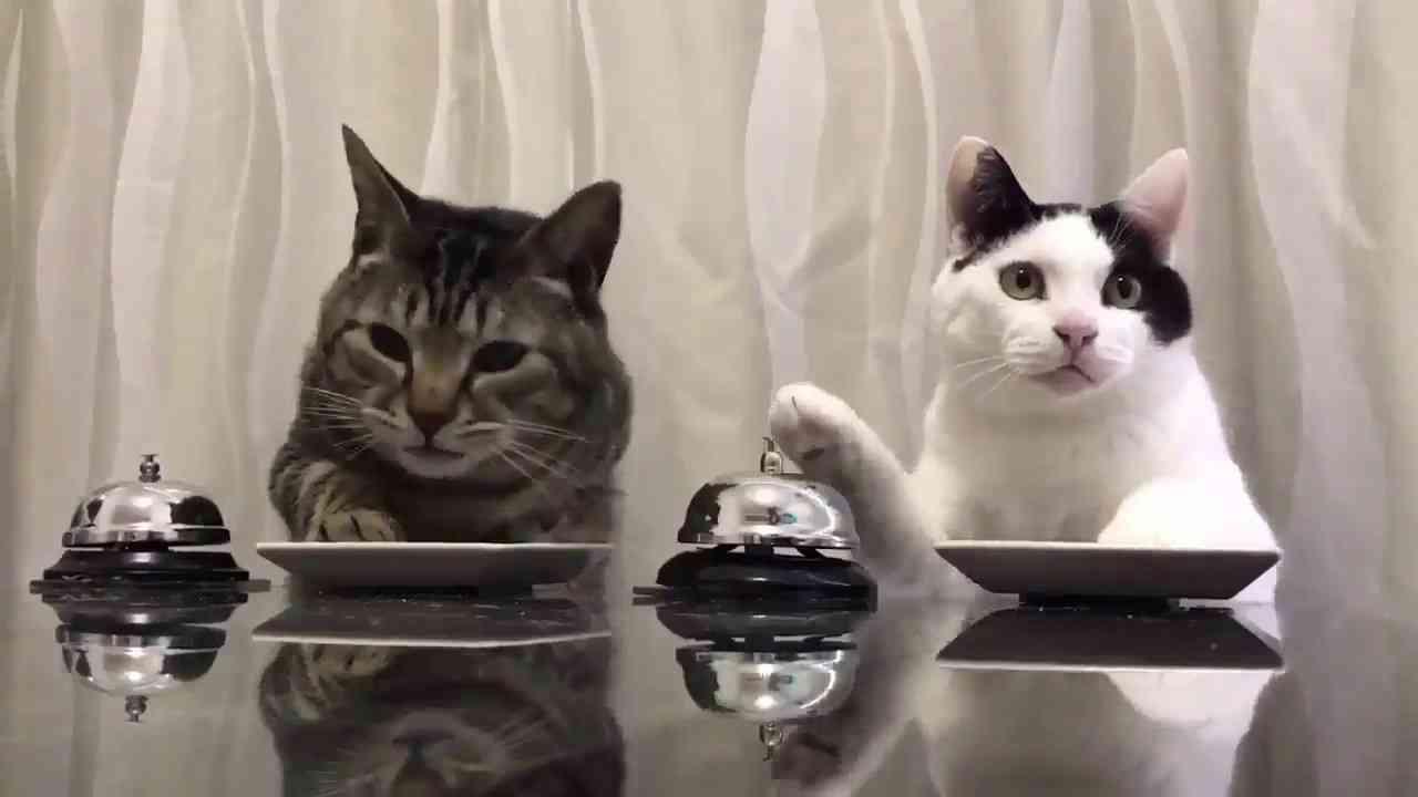 【爆笑】ベルを鳴らすあざとい猫が可愛すぎる件。 - YouTube