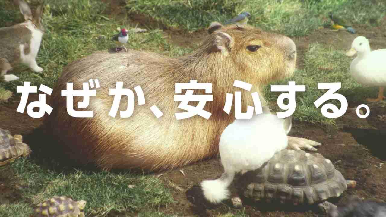 """カピバラの""""なぜか安心する""""シーンのオンパレード!Web限定動画「#なぜか安心する『カピまる(*´ω`*)劇場』」 - YouTube"""