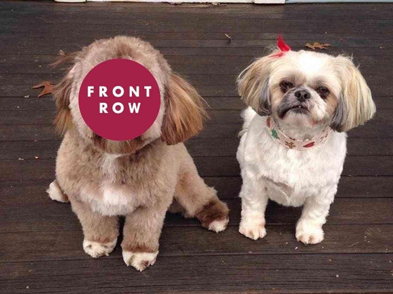 「人の顔に見える」と話題の『犬』が予想以上に人面犬 - FRONTROW