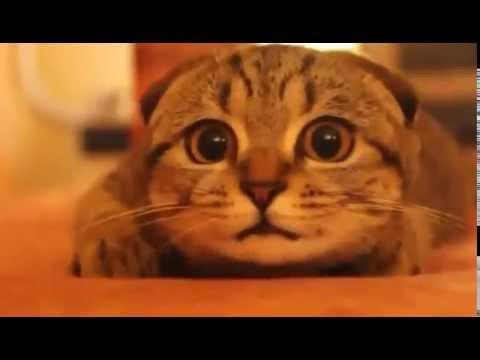 ホラー映画を見ている猫が超かわいい Super cute cat watching a horror movie - YouTube