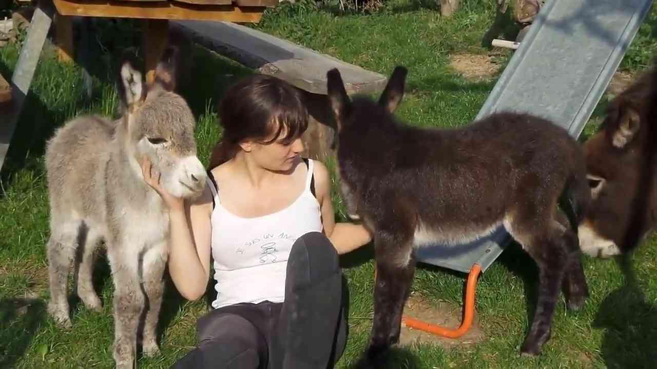 かわいいロバの赤ちゃんのモフモフ動画 - YouTube