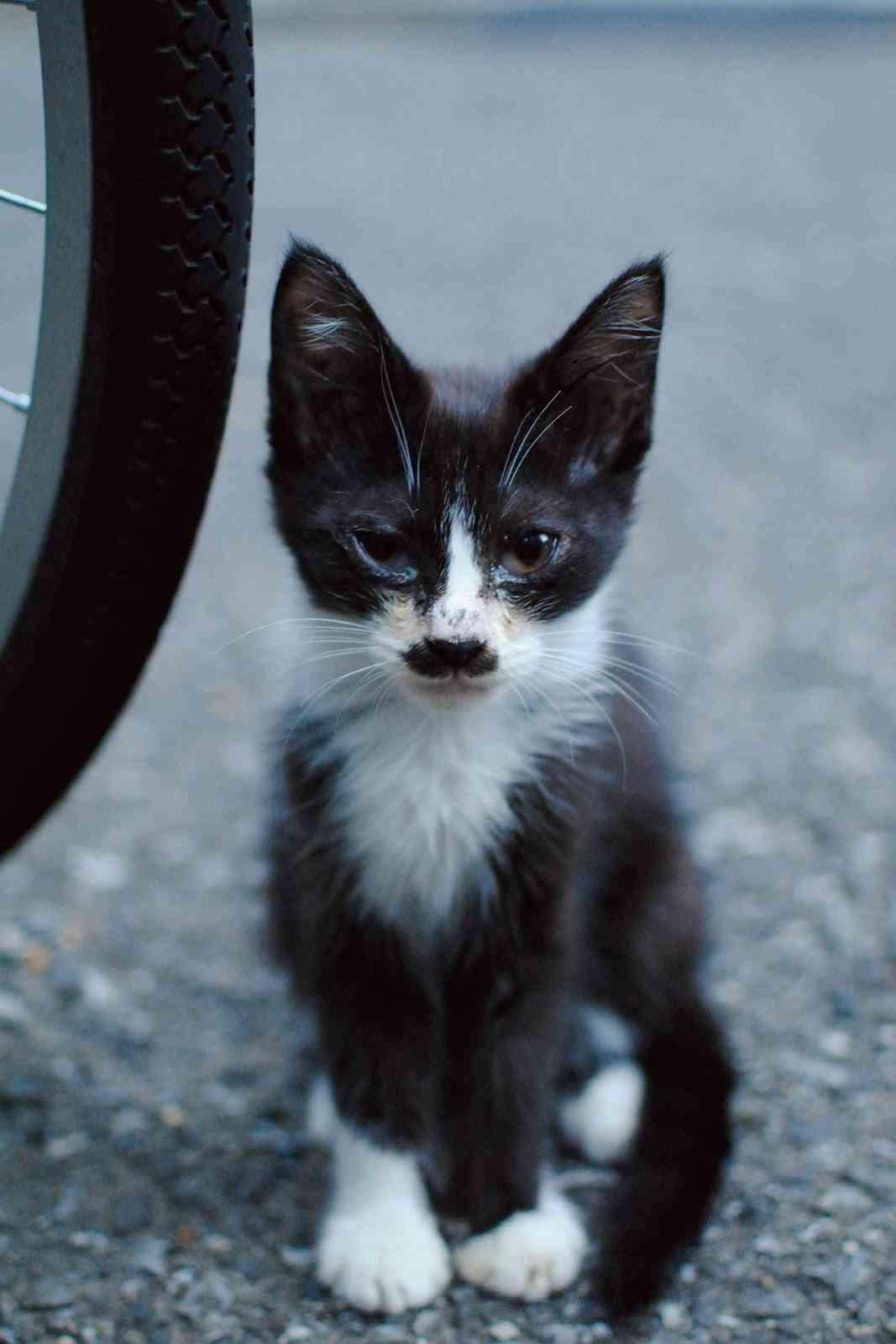 猫を拾ったのですが、どうぞご教示ください。