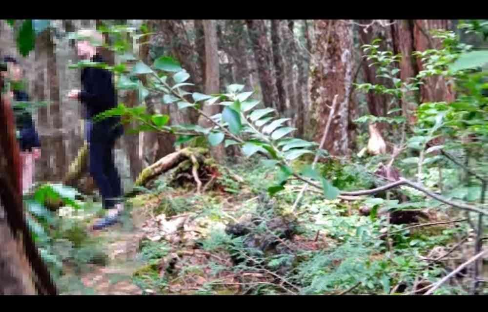 青木ヶ原樹海でYouTuberが「フリーハグ」 自殺志願者「説得」動画に賛否 : J-CASTニュース