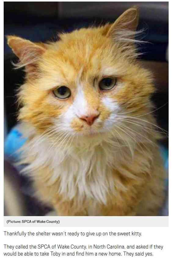 【海外発!Breaking News】元飼い主のもとへ19km歩いて戻った猫、安楽死させられそうに(米) | Techinsight(テックインサイト)|海外セレブ、国内エンタメのオンリーワンをお届けするニュースサイト