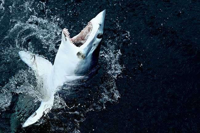 タイの人気リゾートにサメ=観光客かまれ大けが