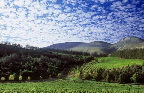 おすすめのワインは南アフリカ産にあり?ワインビギナーにもおすすめしたい銘柄とは