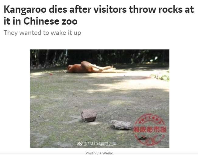 【海外発!Breaking News】「起きろ!」寝ていたカンガルー、見学者の投石により死亡 中国の動物園で   Techinsight(テックインサイト) 海外セレブ、国内エンタメのオンリーワンをお届けするニュースサイト