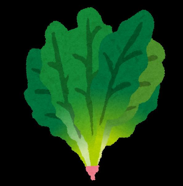 傷みやすい野菜の保存法【冷蔵編】
