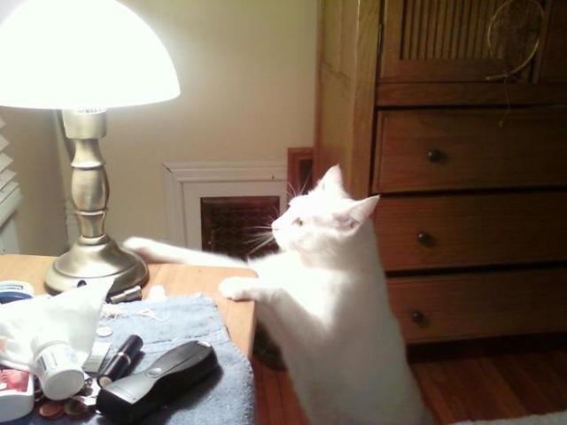悪意の見え隠れする猫たちの所業を映した画像集。果たしてこれはギルティか?