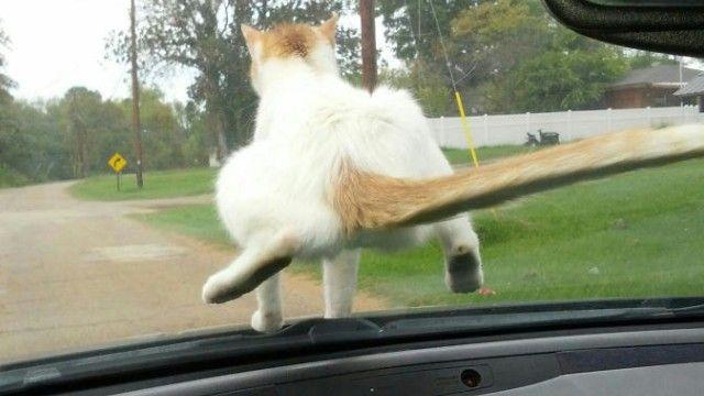 悪意の見え隠れする猫たちの所業を映した画像集。果たしてこれはギルティか? : カラパイア