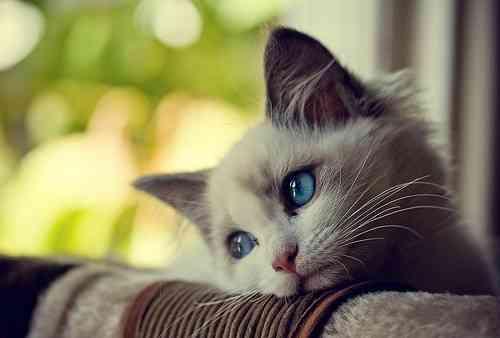 ネコジマン 待ちぼうけ 猫画像,猫写真の投稿サイト