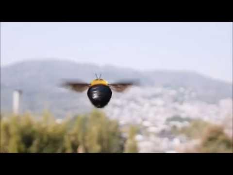 クマバチの停空飛翔(ハイスピード) - YouTube