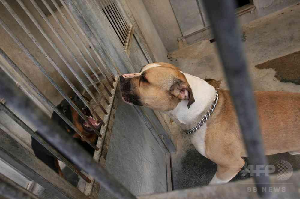 ペットの犬が飼い主親子を殺害か、自宅に遺体 ドイツ 写真1枚 国際ニュース:AFPBB News