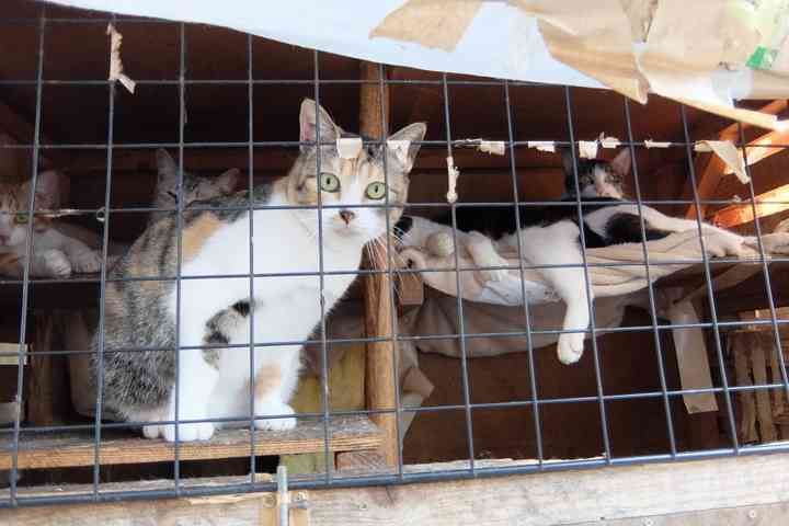 猫22匹「動くぬいぐるみ」扱い…ゴミ屋敷、野ざらしケージでネグレクト、エサは食べ残し弁当