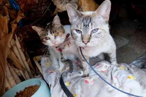 猫22匹「動くぬいぐるみ」扱い…ゴミ屋敷、野ざらしケージでネグレクト、エサは食べ残し弁当 - 弁護士ドットコム