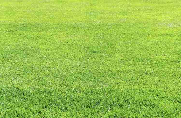交際中、隣の芝生が青く見えたらどうしますか?