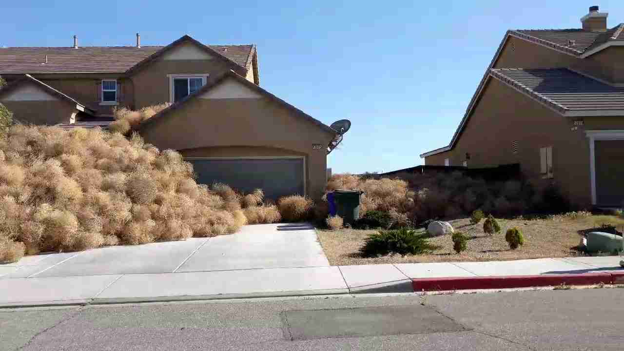 Tumbleweeds invade - YouTube