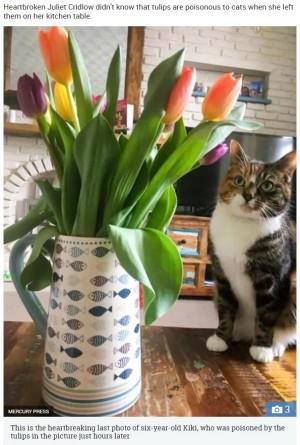 【海外発!Breaking News】チューリップと一緒に写真に収まった猫、翌日に亡くなり悲劇の1枚に(英) | Techinsight(テックインサイト)|海外セレブ、国内エンタメのオンリーワンをお届けするニュースサイト