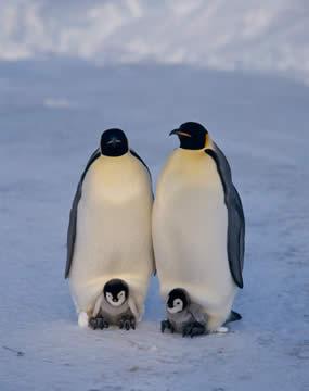 落ち着くのかな? 飼育員さんの足の間に挟まるペンギンが可愛すぎる…