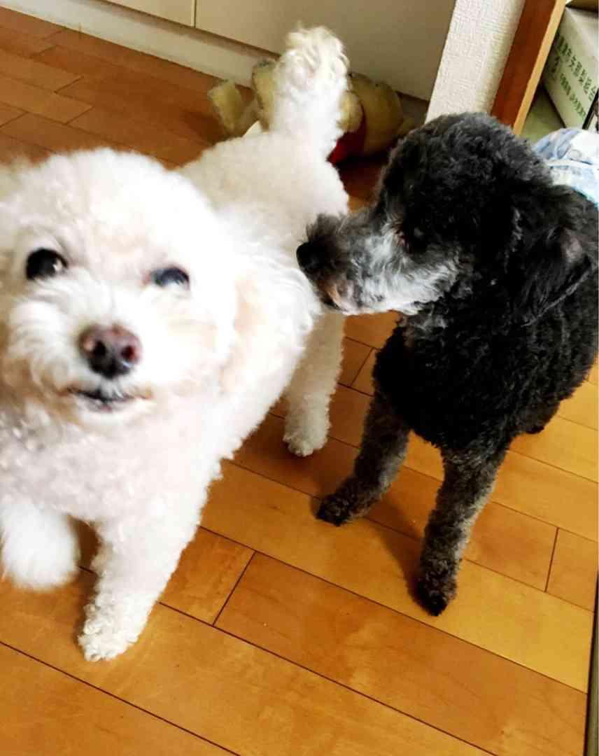 保田圭 愛犬2匹が相次いで他界「後を追うように旅立ちました」
