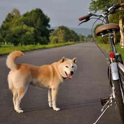 注意して下さい!!自転車での犬の散歩は違法になるって知っていますか?|犬の総合情報サイト ペットスマイルニュースforワンちゃん