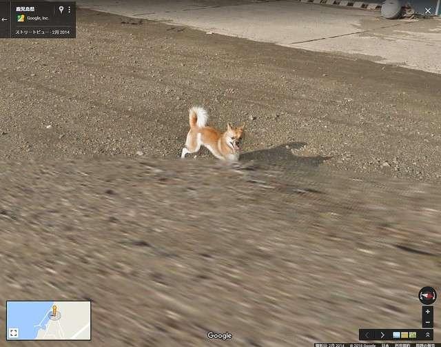 Googleストリートビューの撮影車を猛追 種子島のワンコが可愛いと話題