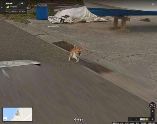 Googleストリートビューの撮影車を猛追 種子島のワンコが可愛いと話題 - ライブドアニュース
