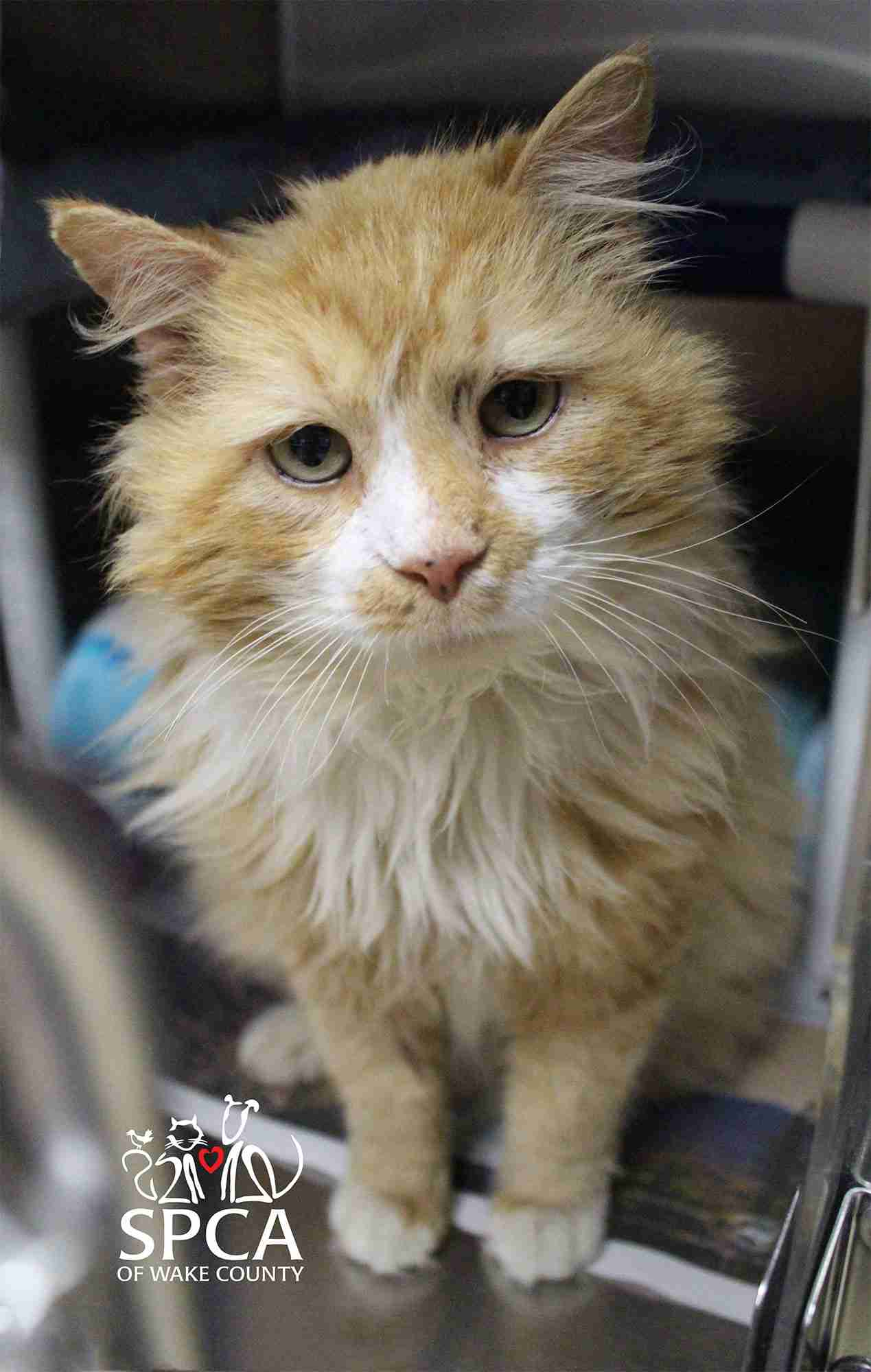 Abandoned Cat Walks 12 Miles Back to Family Who Rejected Him | PEOPLE.com