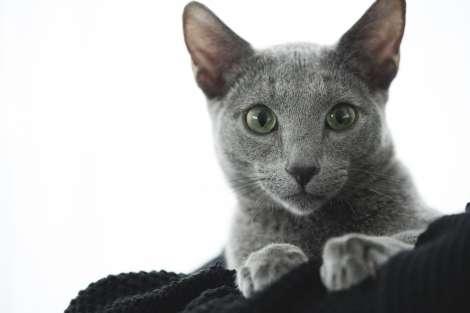 沢尻エリカ、主演作の猫を引き取る「新たな家族が増えてとても幸せ」
