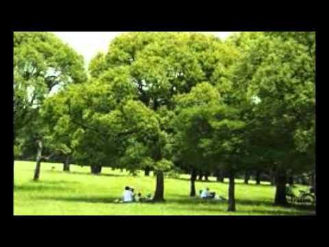 Ombra mai fù (Largo) オンブラマイフ(ラルゴ) -ヘンデル - YouTube