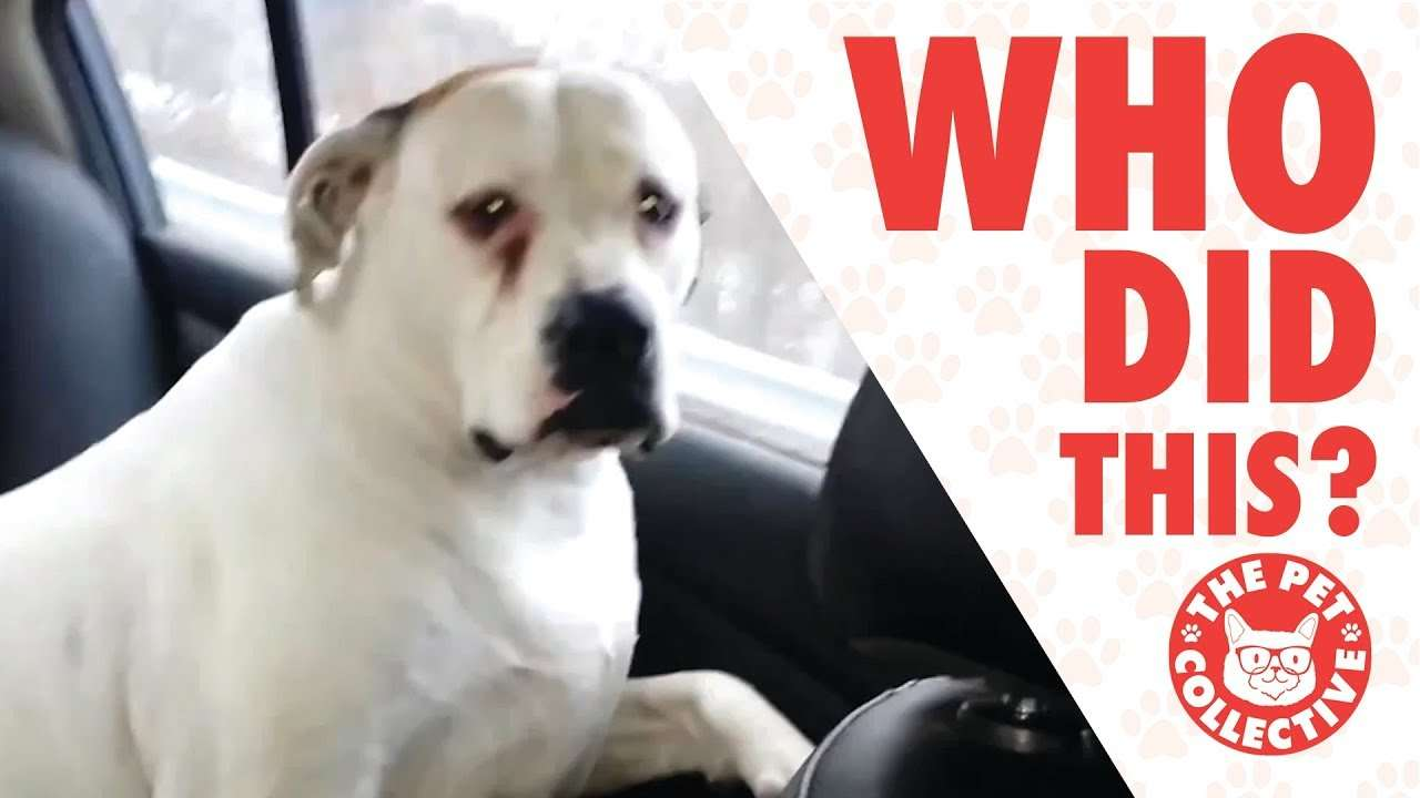 Who Did That?! | Guilty Dogs Video Compilation 2017 - YouTube