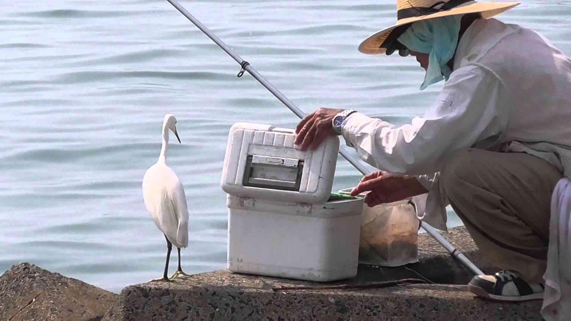 釣り人とシラサギ - YouTube