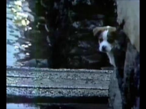 【企業広告】サントリー不朽の名作『雨と犬』(トリスウィスキーCM 60秒)1981年|仔犬の名前はトリス君 - YouTube