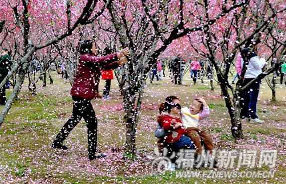 中国人花見客 枝折り注意され「日本は活け花ある」と逆ギレ