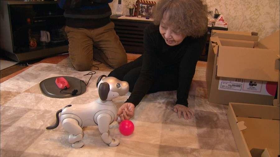 """""""もう愛犬の死に目にあいたくない""""感情に寄り添う犬型ロボットaibo人気のわけ 札幌市"""