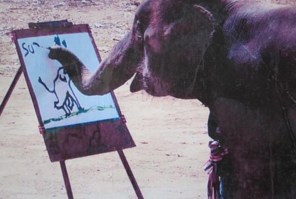 ブタの「ピガッソ」が描く絵、最高32万円の値