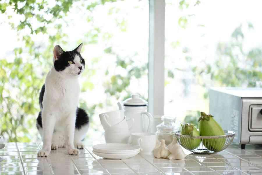 猫にニンニクは絶対NG?実は、そうでもないかも…って本当?
