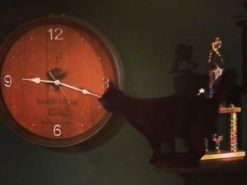 猫の飼い主「やけに時計が進むと思っていたけど…理由がようやくわかった!」(2018年5月6日) - エキサイトニュース