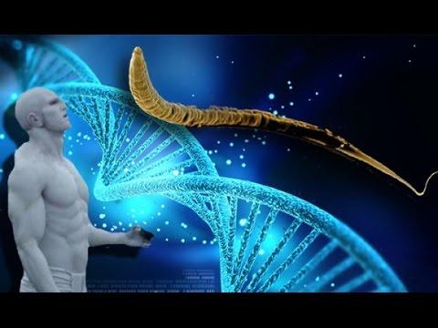 【世界の真実】 日本人には『プレアデス』の遺伝子が使われていた - YouTube
